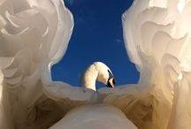 Wings / by Gala Nightowl