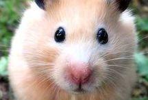 cute animals / by Nancy Stewart