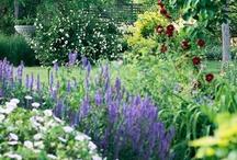Garden of Earthy Delights in My Own Yard / landscaping ideas; plants & gardening tips; paths, gates & fences; ponds, water features & fountains; bird baths & bird houses; garden art / by Maureen Halter