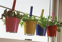 Gardening & Green Goodness / by Becky Schoeppner
