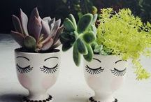 Love of Terrariums, Flowers, Succulents and the Garden.. / by Nicky Goin