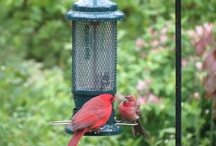 Favourite Birdfeeders / by Hyde Park Feed & Country Store