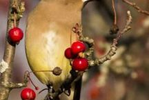 Be a citizen scientist ~ report birds/butterflies / by Hyde Park Feed & Country Store