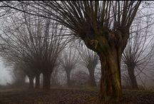 Tree Magic... / by Mikki Shull