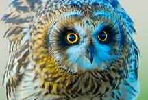 Owls / by Aida Lopez Fortier