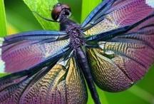 Libélulas/Dragonflies / by Aida Lopez Fortier