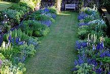 Blue & white herbaceous border / Plants for Big blue herbaceous border @ Garden of St Christopher / by Debby Tenquist