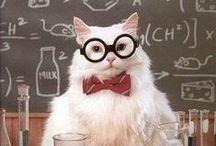 The Geek in Me / by Tina Sanders