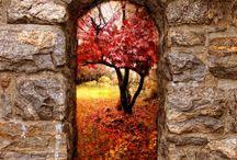 Fall, Fabulous Fall! / by Sharon Hopper