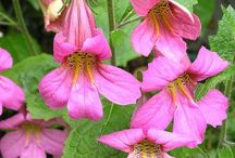 PINK FLOWER ID / PLANTS IN THE PINK BORDERS @ GARDEN OF ST CHRISTOPHER / by Debby Tenquist