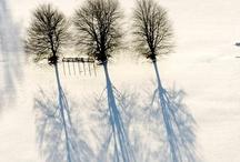 Winter White / by Wendy Sanham