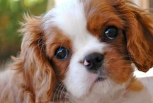 Sweet Dogs & Cute Babies / Adorable puppies, babies and more. / by Sandee Jackson