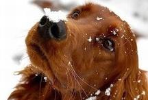 Must Love Dogs! / by Myrical Gratton