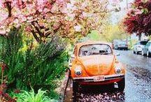 Spring / by Viola
