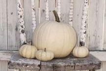 Pumpkins / by Jill Norwood
