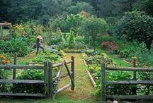 garden / by Kat Marrow