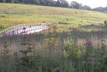 Meadow Garden / Our new ecologically designed Meadow Garden, has over 3 miles of walking and hiking trails and is home to many species of wildlife .   / by Longwood Gardens