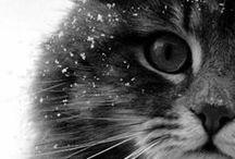 Cats / Meow / by Helen Brumfield