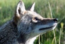 Wildlife / by Earthfire Institute: Wildlife Sanctuary and Retreat Center