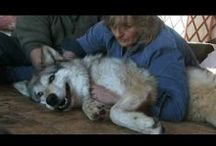 Wellness & Spirituality / by Earthfire Institute: Wildlife Sanctuary and Retreat Center