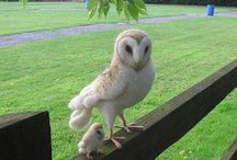Owls / by Jeanette Easley