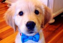 I just love puppies.  / by Erin Bozarth