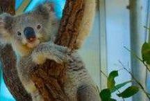 Australia / by Expedia