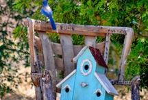 In my Garden/Nel mio Giardino / by Rita Reade