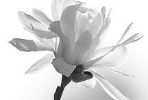 Black and White / by Lynn LaFleur