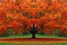 Tree Hugger... / by Rosalyn Wilson