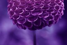 I Love Purple / by Vicki B