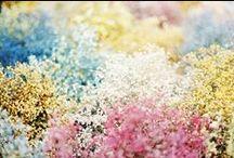 Botanical / by The Pretty Secrets