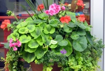 Container Gardens / Love the look of container gardens, flowers or vegetables / by Karen Case