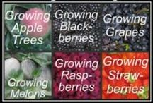 """Micro Farming - Crops: Orchard and Fruit / Fruit trees, bushes, vines and crops.  If it's considered a """"fruit"""" (except tomato), it's here. / by Valerie Ohle"""
