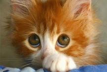 CAT LOVE / by Karyn Wilson