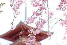 Mood*Japan大好き / by Tiki tiki