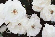 Blooms / by Alex Proffitt