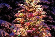Holidays / by Casey Hafeman