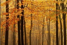 """Autumn, Halloween and Thanksgiving / """"For man, autumn is a time of harvest, of gathering together.  For nature, it is a time of sowing, of scattering abroad."""" / by Julia Jones"""