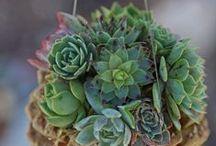 Succulent <3 / by Debra Kay