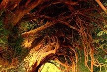 Trees / by Kay VanDyke