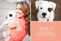 Dogs of the Blogs / by Serena Faber-Nelson