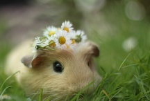 cute / by Olga Gonorovsky