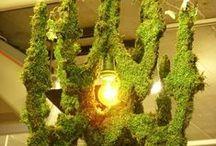 Green Thumb / Gardening; Planting; Organic / by Jasmine Sniffen-Carson