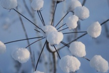 Snow of joy / by Brandy Mirly