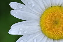 Daisy Meadow / by Brandy Mirly