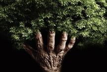 Eco friendly / by Konstantina Saraidari