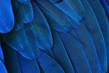 Mood Blue/ Purple / by Simone Vloet