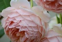 Flowers / by Marie Helene Askienazy