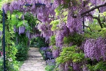Garden Design / Color, Contrast and Texture / by Donna